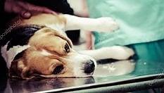 Roma: il cane si deve operare, la padrona ottiene due giorni di permesso retribuito